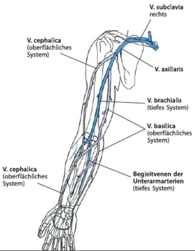 Fantastisch Anatomie Der Cephalica Galerie - Anatomie Ideen ...